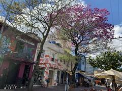 """I'll Survive"", says the Ipê-Rosa, São Paulo (winter - 29ºC), Brazil. (ER's Eyes - Our planet is beautiful.) Tags: sãopaulo paulista paulistano cidadão sp sampa bigcity metrópole brasil brazil américadosul southamerica américa cidadedoterceiromundo 24horas terradagaroa cidade city saopaulo sanpablo flickrs bandeira flag capital essepê saintpaul capitalcity capitaldoestadodesãopaulo rosa pinkflowers árvoresdobrasil ipérosa ipêroxo ipêrosa tecomaheptaphylla braziliantrees árvores trees flowers flores winter inverno pinheiros largodabatata streetphotography rua street allfreepicturesjuly2018challenge allfreepictures"