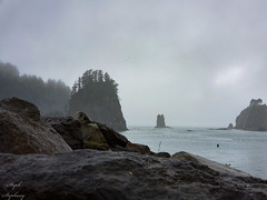 La Push in the Rain (stephanie.ovdiyenko) Tags: lapush firstbeach rocks seastack fog rain storm ocean pacificocean washington pnw landscape