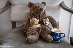Lieblingsonkel (wird fortgesetzt) --- Favourite uncle (to be continues) (der Sekretär) Tags: becher bär getränk heissgetränk junges jungtier kaffee kaffeetasse möbel möbelstück plüschtier samt sessel spielzeug stoff tasse teddy teddybär textilien tier welpe wolf animal bear beverage chair coffee coffeecup cub cup drink fabric fabrics furniture hotbeverage hotdrink itemoffurniture mug pieceoffurniture softtoy stuffedtoy teddybear toy tumbler velvet whelp younganimal