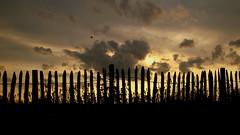evening views (buidl-lemmy) Tags: frankenhausen domäne domänefrankenhausen hessen nordhessen kräutergarten abend evening zaun fence clouds wolken warm
