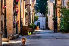 26072019-IMG_7619.jpg (KitoNico) Tags: italie pouilles italia lecce cat chat gatto colors colours