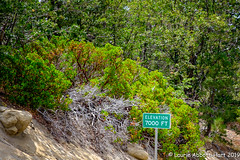 20190807 Beauty 30035-Edit (Laurie2123) Tags: bigbear fujixt2 laurieturnerphotography laurietakespics laurie2123 odc odc2019 ourdailychallenge