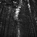 The Trees Rise Above Me Like a Kindred Soul (Black & White, Cuyahoga Valley National Park)