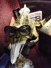 Ambulances & Funeral Vehicles (Steve Taylor (Photography)) Tags: ambulancesfuneralvehicles book box sunglasses thermometer animal weird odd strange uk gb england greatbritain unitedkingdom london skeleton skull viktorwyndmuseum