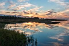 Sunset in Skanör, Skåne. (bholmbom81) Tags: trees sunset water grass forest mirror skåne cloudy sweden balticsea skanör bjornholmbom björnholmbom