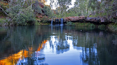 Karijini_Ferns Pool morning light_DSF0274