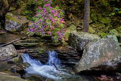 Cloudland Canyon State Park Daniel Creek 05-08-2019 (Jerry's Wild Life) Tags: cloudlandcanyon cloudlandcanyonstatepark danielcreek georgia waterfallstrail explore explored inexplore