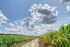 Wemmel-Clouds-2 (foto_morgana) Tags: aurorahdr2019 belgië belgique belgium clouds iphonexsmax on1photoraw2019 outdoor panoramic vlaamsbrabant wemmel corn cornfield nuages