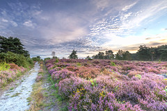 Clouds From The West (nicklucas2) Tags: landscape cloud heather dawn
