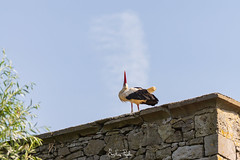 Cigogne (Emeline P) Tags: sonyalpha77 tamron sigma wild wildlife wildanimal pairi daiza belgique loutre oiseau bird rapace ours jardin asie otarie hindou duck elephant pandaroux redpanda méduse