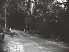 Sunset Avenue (Matthew Paul Argall) Tags: jcpenneyelectronicstrobepocketcamera 110film 110 subminiaturefilm lomographyfilm 100isofilm road street sunsetavenue blackandwhite blackandwhitefilm