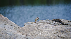 CuteFucker (BrennanWasHere) Tags: rocky mountain national park nature rock all the way up water animal cute