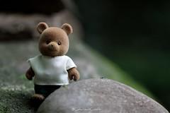 . (CarloAlessioCozzolino) Tags: orsetto cornatedadda portodadda toy nelfantasticomondodellafantasia macro