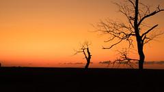 Silhouette of Trees (anlgngr7) Tags: canon eos 77d 18135mm is usm nano lens trees tree silhouette shadow shadows sunset red sky kırmızı gökyüzü ağaçlar ağaç siluet gölgeler gölge