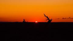 Ending of one day, in the middle of Trees (anlgngr7) Tags: canon eos 77d 18135mm is usm nano lens sunset sun red sky trees tree shadow siluet silhouette gölgeler gölge ağaçlar ağaç kırmızı gökyüzü günbatımı güneş