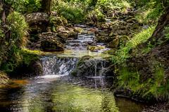Rivière (musette thierry) Tags: rivière eau water musette thierry belgium belgique hautesfagnes promenade balade nikon nikkor paisible été vert green