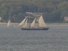 The Dutch top sail schooner Wylde Swan in Öresund (frankmh) Tags: ship tallship schooner wyldeswan öresund