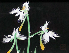 Egret orchid (Japanese Flower and Bird Art) Tags: flower egret orchid habenaria radiata orchidaceae kokyu hashimoto modern painting japan japanese art readercollection