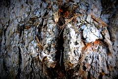 Life Tree (Max Perrini alias IK7TOE) Tags: life italy tree nikon albero calabria vita nikond500 maxperrini