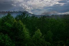 Smokey Mountain View (markburkhardt) Tags: smokey mountains rain forest gree trees fog clouds summer smoke sky nature hills green pine oak poplar