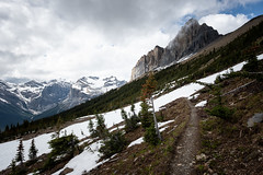 Pointy Tips (Aymeric Gouin) Tags: canada britishcolumbia bc cb yoho national park parc landscape paysage paisaje landschaft mountains montagnes fujifilm xt2 travel voyage aymgo aymericgouin