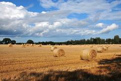 Summer scene (eigjb) Tags: ballyedmond co ireland summer scene hay harvest bales sky farming irish cloudy clouds blue 2019 wexford farm land