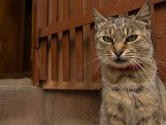 1 (noksvillq) Tags: cat canon 77d