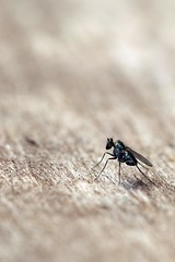 Depth of fly (JaaniicB) Tags: canon 77d eos 100mm f28 nature summer macro fly