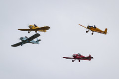 Druine D31 Turbulents of the Tiger display team (Paul Braham Photography) Tags: historic veteran vintage classic aeroplane airplane aircraft glider fighter trainer biplane monoplane dehavilland antonov druine calidus bucker aeronca