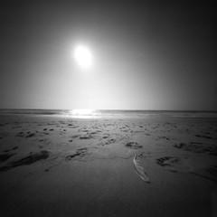 Angel has landed (Rosenthal Photography) Tags: dänemark ff120 urlaub epsonv800 pinhole mittelformat lochkamera 6x6 realitysosubtle6x6 asa50 ilfordrapidfixer 20190801 ilfordpanfplus analog ilfordlc2912922°c55min denmark abgel beach northsea sea sand landscape seascape feather houvig danmark summer sun sunshine evening realitysosubtle rss 205mm f137 ilford panf panfplus lc29 rapid fixer 129 14 epson v800
