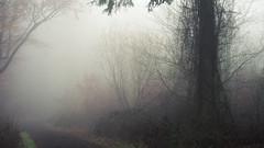 Dark Tangle (Netsrak) Tags: baum bäume eu eifel europa europe forst landschaft natur nebel rheinland rhineland wald fog forest landscape mist nature outdoor trees winter woods