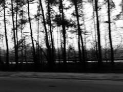 Trees (Harley Mitchell) Tags: rain doom gloom nature trees northcarolina blackandwhite