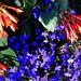 Fuchsia and Sapphire Lobelia