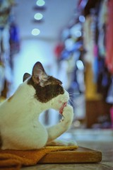 La toilette (Mister Blur) Tags: happy international cat day gato chat furry friend toilette baño aseo limpieza cleaning depthoffield dof profundidaddecampo bokeh blur blurry lights low pointofview pov nikon d7100 35mm nikkor lens f18 snapseed rubén rodrigo fotografía littledoglaughedstories