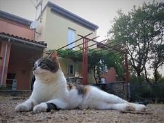 watch-cats (smokykater - 800k+ views) Tags: corfu greece benni püppi trespass garden house island summer takecare zuhause haus garten katze aufpassen hund tier