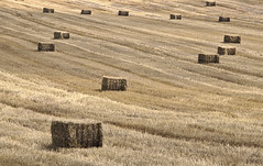 Harvested / Собрано (Boris Kukushkin) Tags: crops field yellow bale august landscape color урожай злаки поле желтый тюк август пейзаж belarusian nature belarus jupiter 37a юпитер 37а