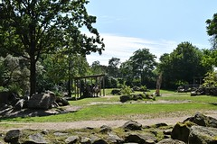 Diergaarde Blijdorp / Rotterdam Zoo (Hugo Sluimer) Tags: diergaarde blijdorp rotterdam zoo diergaardeblijdorp dierentuin diergaardeblijdorprotterdamzoo dieren dierenpark rotterdamzoo zuidholland nederland holland nikon nikond500 d500 natuur nature natuurfotografie natuurfotograaf naturephotography