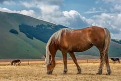 Il più bello del branco (marypink) Tags: castellucciodinorcia montisibillini umbria cavallo horse hills clouds nikond800 nikkor70200f28