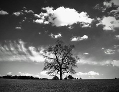 Beautiful tree (romeos115) Tags: tree bw blackandwhite sky clouds grass alone barn silhouette branches mood still tall oak monochrome trees contrast moody maryland field countryside atmosphere sunny sun bright beauty quiet big farm silos