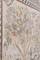 Ohrid, Macedònia del Nord. Mosaic de Heracleia Lincestis (Ciutat d'Hèrcules) fundada per Filip II de Macedònia a la meitat del segle IV a.C. (heraldeixample) Tags: heraldeixample macedonia macedònia macedoniadelnord macedoniadelnorte northofmacedonia ohrid heraclealincestis mosaic mosaico albertdelahoz
