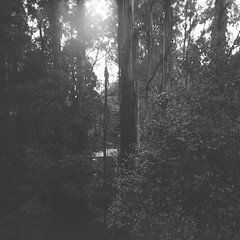Trees (Matthew Paul Argall) Tags: 120film 120 mediumformat blackandwhite blackandwhitefilm ilforddelta100 100isofilm squareformat squarephoto 6x6 trees plants