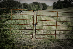 But It Is Locked (HFF) (13skies) Tags: bar barricade railing fence block guard palisade gate locked field chain entrance exit egress hff metal farm noentrance private keepout no fencefriday trespass stop happyfencefriday countryside country road grass trees border