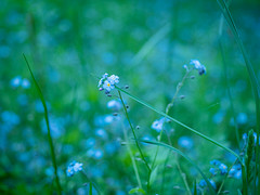 timeless blue on green... (dajonas) Tags: michigan upperpeninsula marquette summer