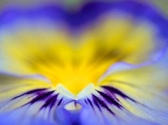 Macro Abstract (Georgi Marinov) Tags: macro flowers floral nature abstract ontario canada