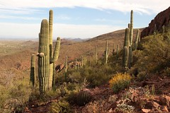 Tucson Mountains (lars hammar) Tags: saguaro cactus saguarocactus saguaronationalpark nationalpark tucson desert mountains