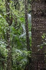 Curitiba-PR (Johnny Photofucker) Tags: curitiba paraná pr brasil brasile brazil parquedopapa parque park parco parc árvore tree albero verde green 24105mm vegetação vegetation