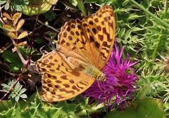 Butterfly (Hugo von Schreck) Tags: hugovonschreck schmetterling falter butterfly insect insekt macro makro buzznbugz canoneosm50 tamronsp90mmf28divcusdmacro11f01