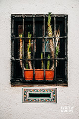 Granada, Spain (ryanwcurleyphotography) Tags: barredwindow cacti andalucia mastinlabs granada summer mailslot spain letterdrop laalhambra window travel ceramic cactus interesting pastel europe centered mailbox