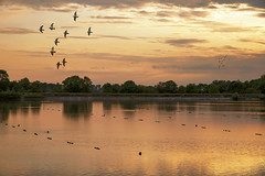 Beautiful light at the reservoir ... (Jackie ...) Tags: brush sunset buckinghamshire canoneosrp marsworth birds