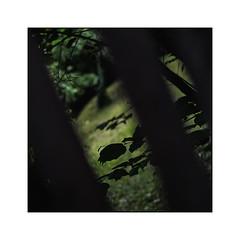 70 [titre 'the secret garden'] (Armin Fuchs) Tags: arminfuchs lavillelaplusdangereuse würzburg anonymousvisitor thomaslistl wolfiwolf fence diagonal garden green trees niftyfifty square hff leaves grass